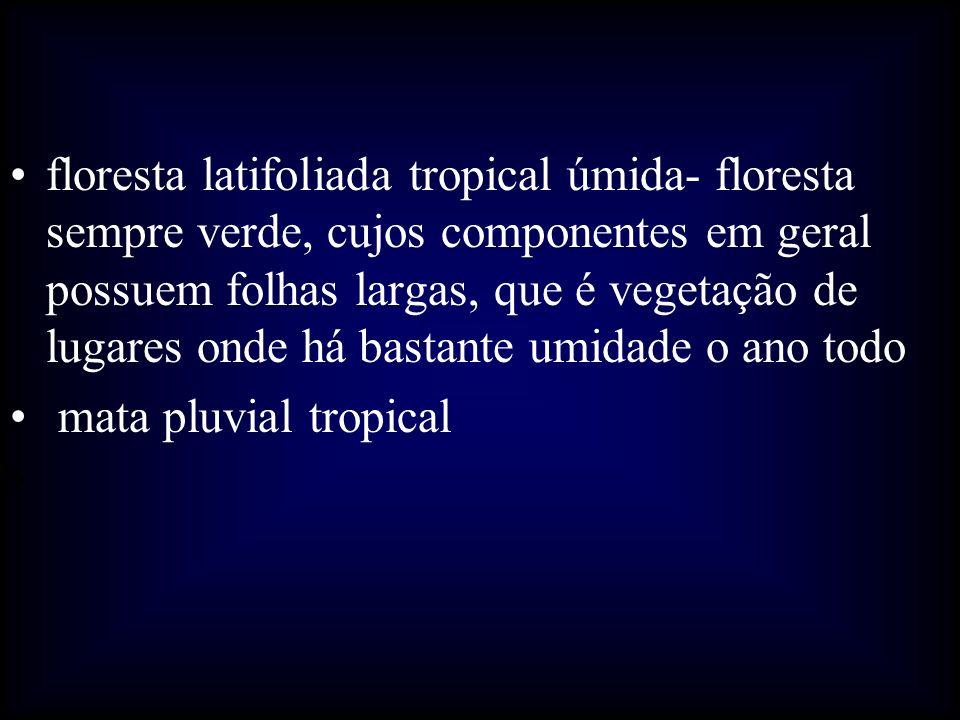 floresta latifoliada tropical úmida- floresta sempre verde, cujos componentes em geral possuem folhas largas, que é vegetação de lugares onde há bastante umidade o ano todo