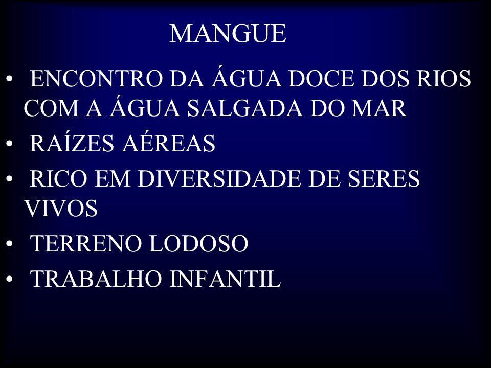 MANGUE ENCONTRO DA ÁGUA DOCE DOS RIOS COM A ÁGUA SALGADA DO MAR