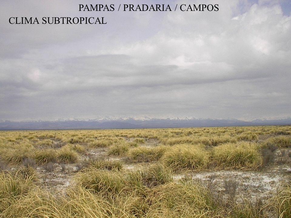 PAMPAS / PRADARIA / CAMPOS