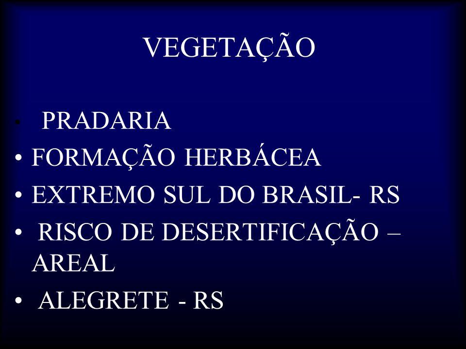 VEGETAÇÃO FORMAÇÃO HERBÁCEA EXTREMO SUL DO BRASIL- RS