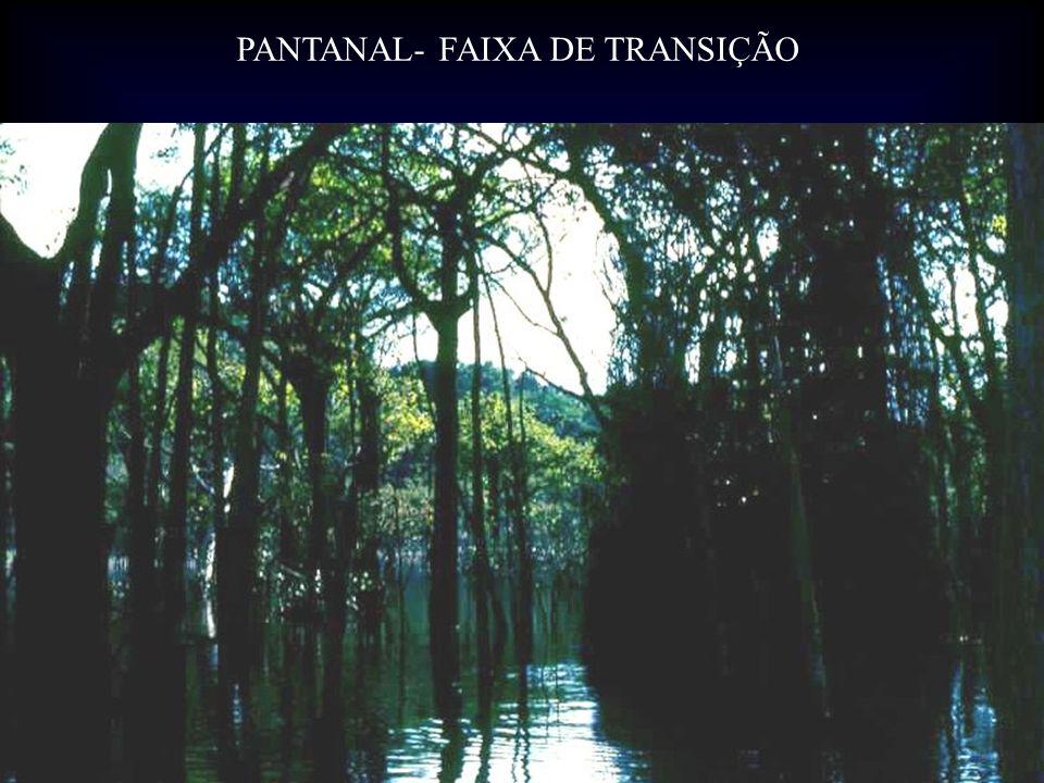 PANTANAL- FAIXA DE TRANSIÇÃO