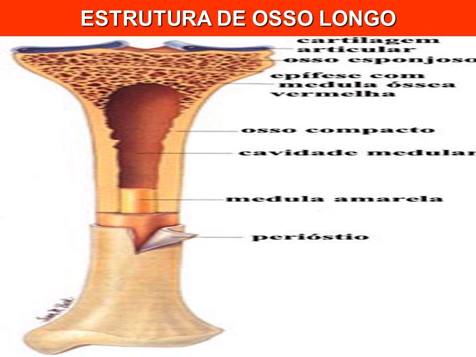 ESTRUTURA DE OSSO LONGO
