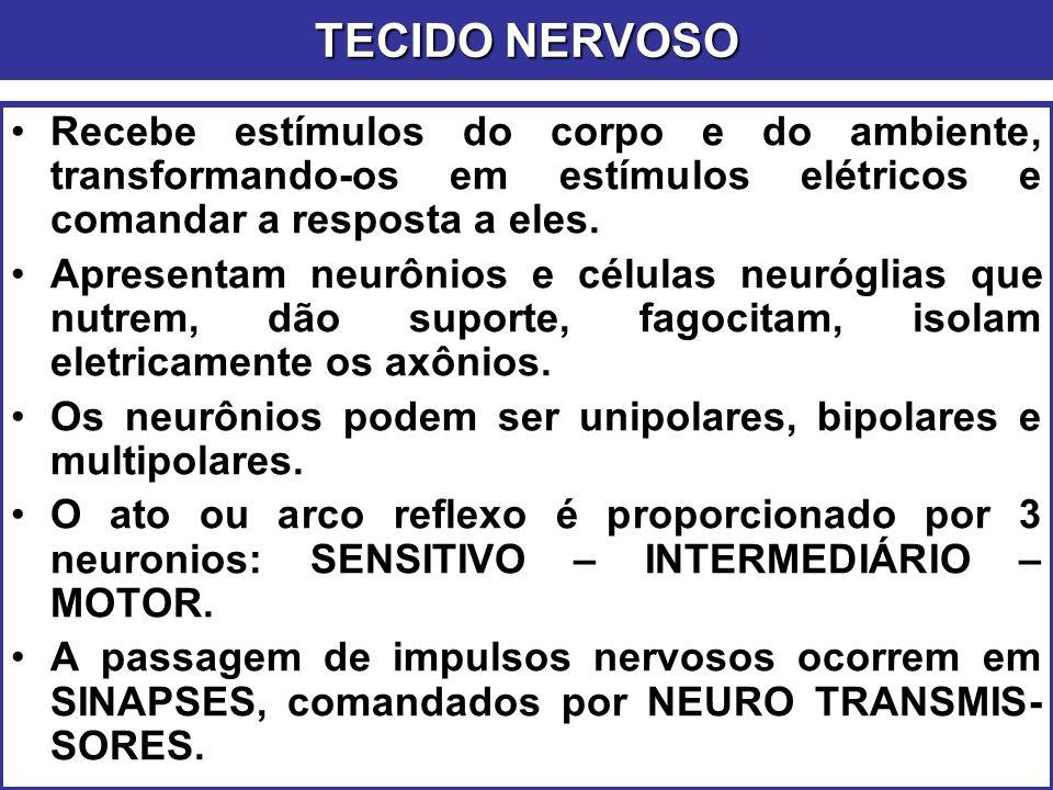 TECIDO NERVOSO Recebe estímulos do corpo e do ambiente, transformando-os em estímulos elétricos e comandar a resposta a eles.