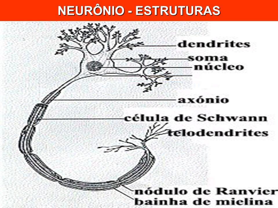 NEURÔNIO - ESTRUTURAS