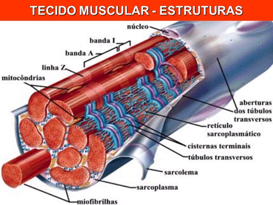 TECIDO MUSCULAR - ESTRUTURAS