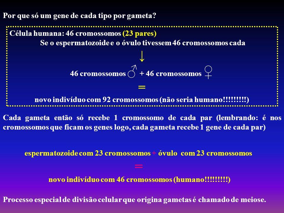 = ↓ = Por que só um gene de cada tipo por gameta