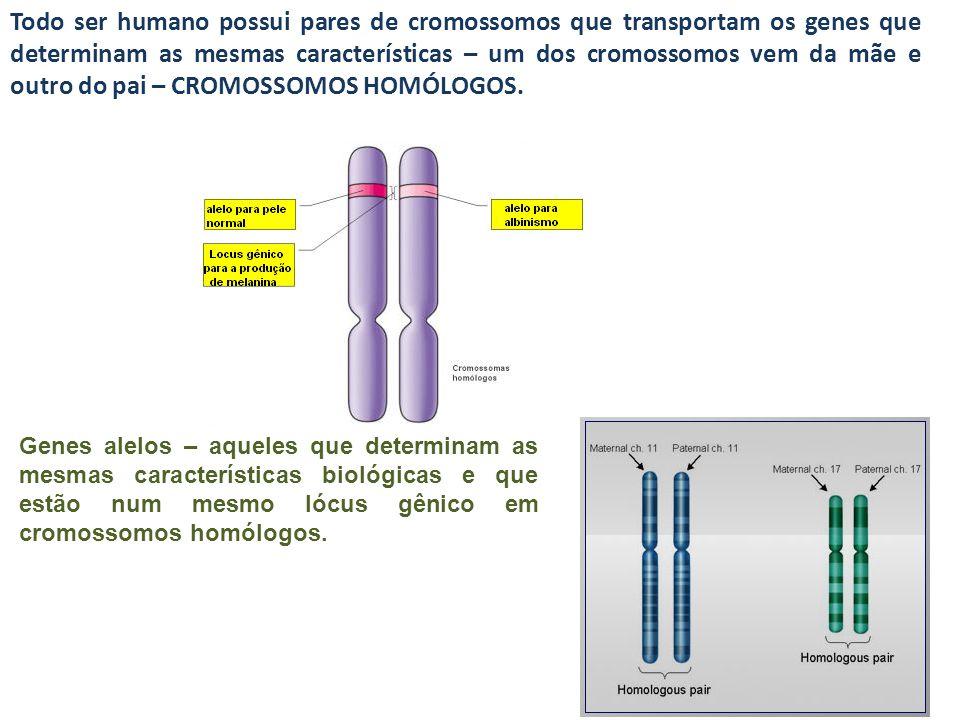 Todo ser humano possui pares de cromossomos que transportam os genes que determinam as mesmas características – um dos cromossomos vem da mãe e outro do pai – CROMOSSOMOS HOMÓLOGOS.