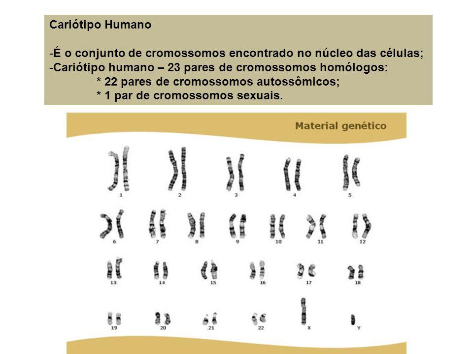 Cariótipo HumanoÉ o conjunto de cromossomos encontrado no núcleo das células; Cariótipo humano – 23 pares de cromossomos homólogos: