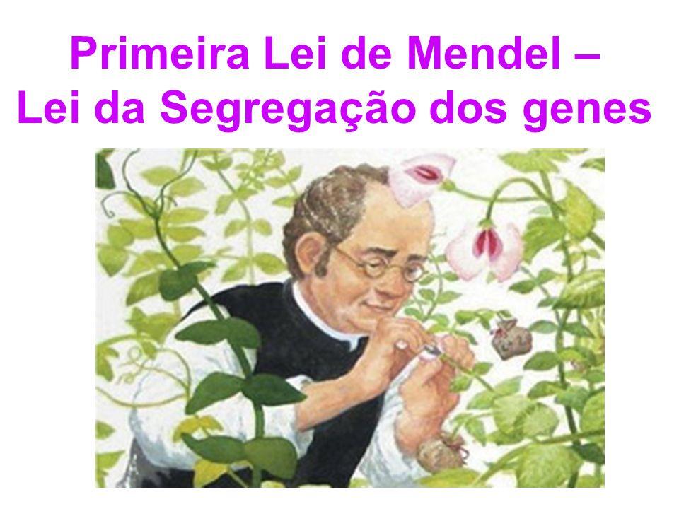 Primeira Lei de Mendel – Lei da Segregação dos genes