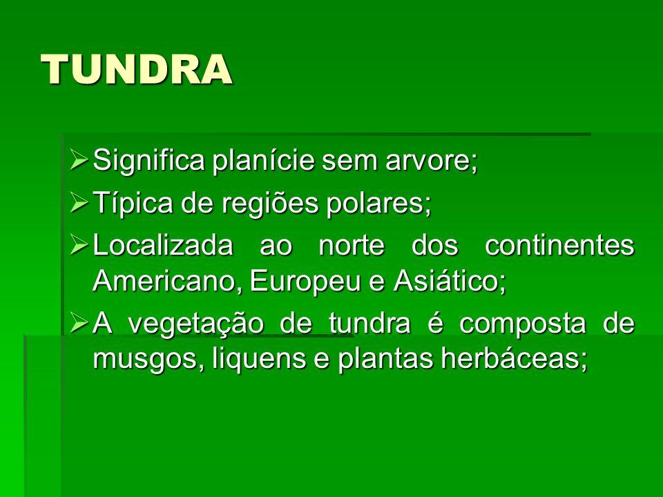 TUNDRA Significa planície sem arvore; Típica de regiões polares;