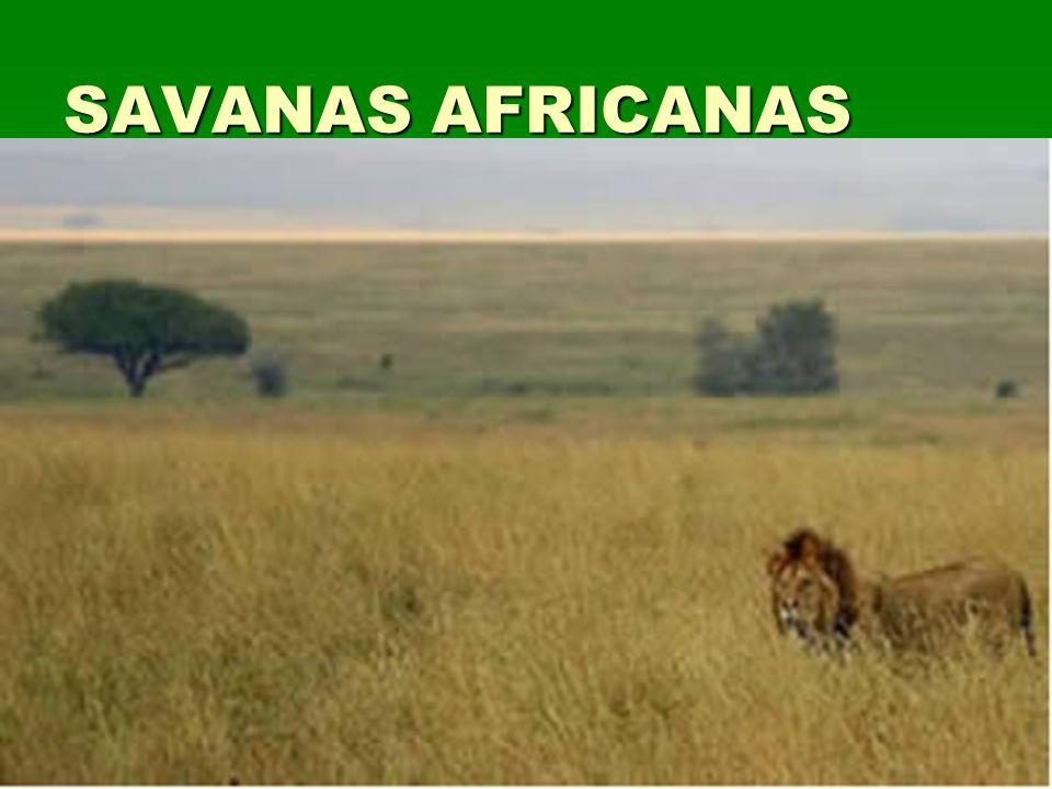 SAVANAS AFRICANAS