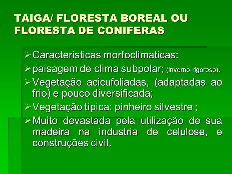 TAIGA/ FLORESTA BOREAL OU FLORESTA DE CONIFERAS