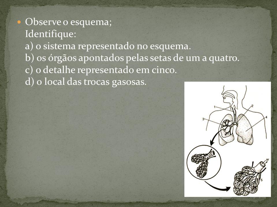 Observe o esquema; Identifique: a) o sistema representado no esquema