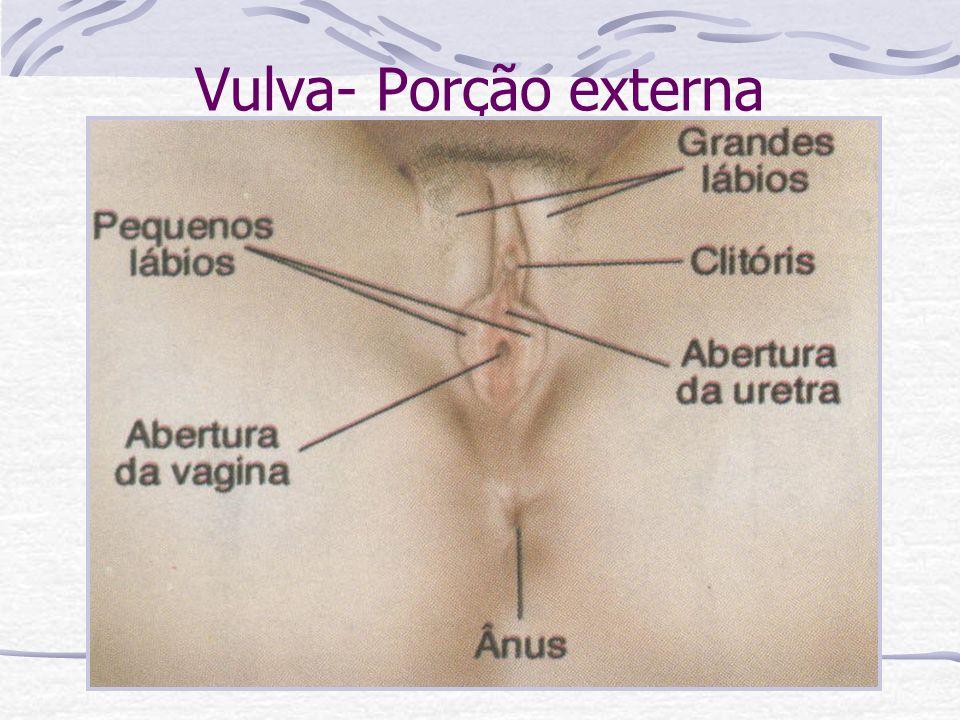 Vulva- Porção externa