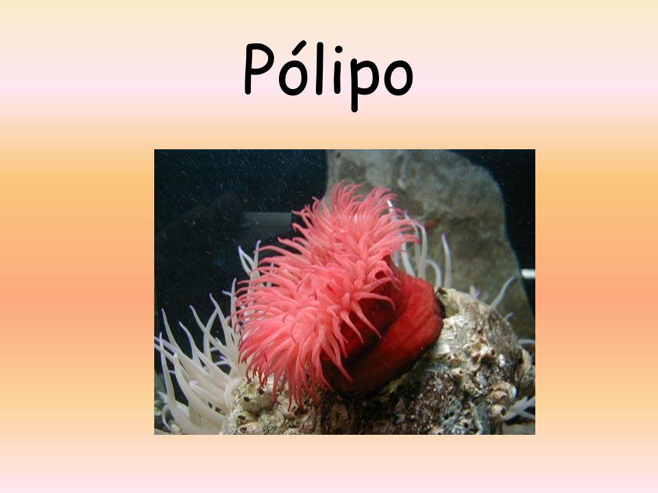 Pólipo