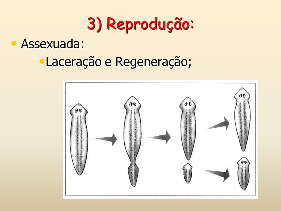 3) Reprodução: Assexuada: Laceração e Regeneração;