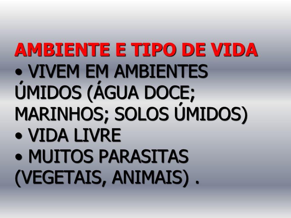 AMBIENTE E TIPO DE VIDA • VIVEM EM AMBIENTES ÚMIDOS (ÁGUA DOCE; MARINHOS; SOLOS ÚMIDOS) • VIDA LIVRE • MUITOS PARASITAS (VEGETAIS, ANIMAIS) .