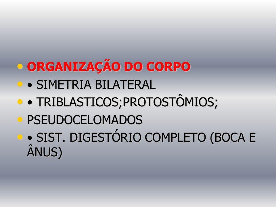 ORGANIZAÇÃO DO CORPO • SIMETRIA BILATERAL. • TRIBLASTICOS;PROTOSTÔMIOS; PSEUDOCELOMADOS.