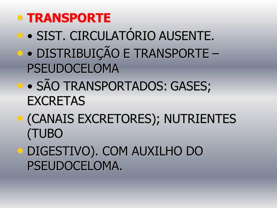 TRANSPORTE • SIST. CIRCULATÓRIO AUSENTE. • DISTRIBUIÇÃO E TRANSPORTE – PSEUDOCELOMA. • SÃO TRANSPORTADOS: GASES; EXCRETAS.