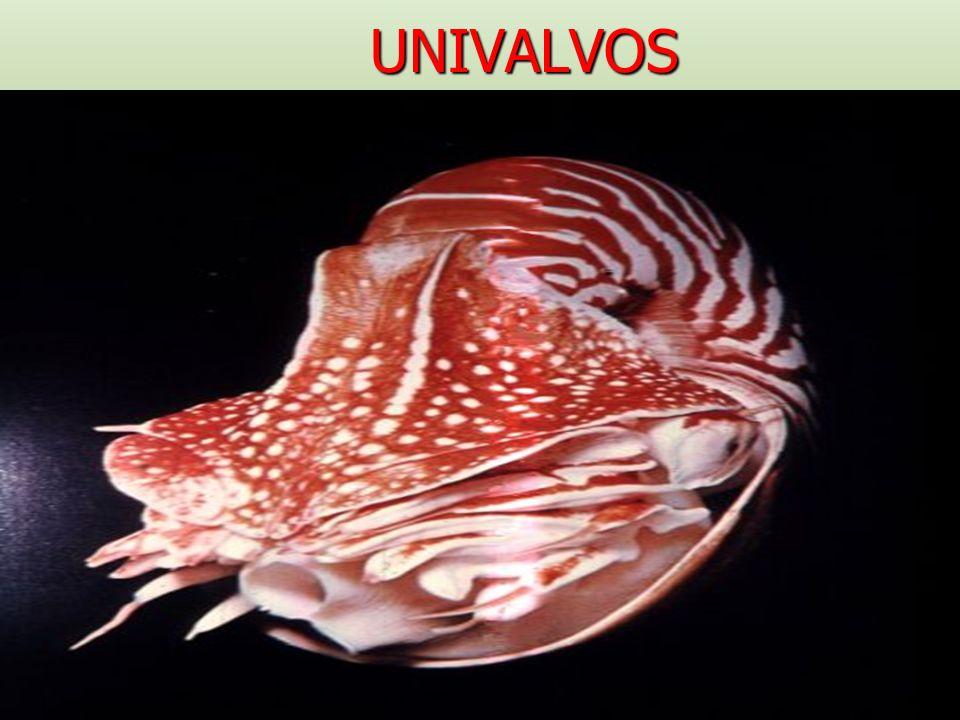 UNIVALVOS