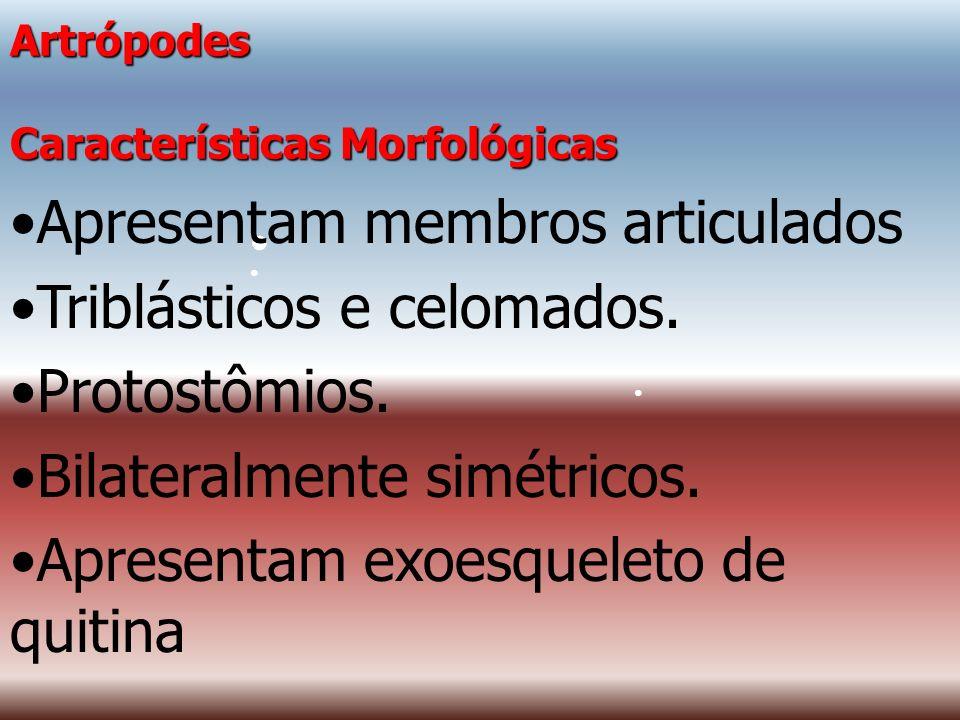 Artrópodes Características Morfológicas