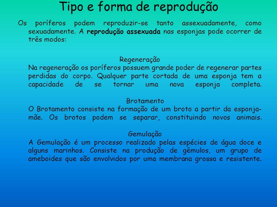 Tipo e forma de reprodução