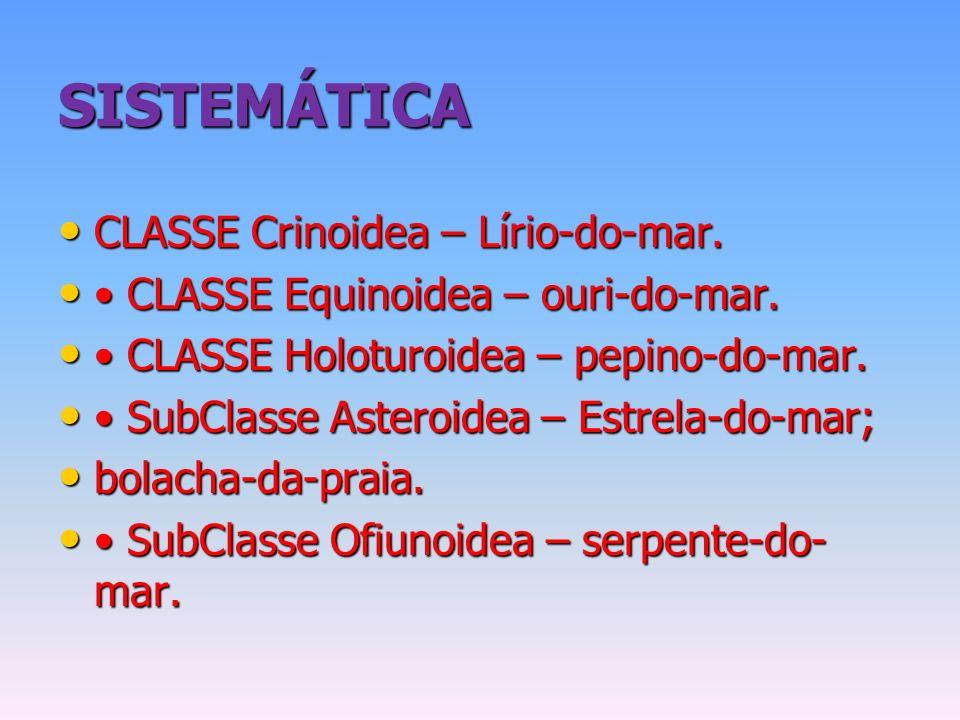 SISTEMÁTICA CLASSE Crinoidea – Lírio-do-mar.