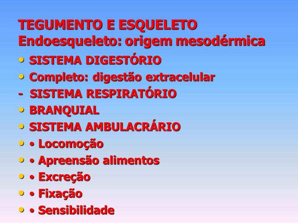 TEGUMENTO E ESQUELETO Endoesqueleto: origem mesodérmica