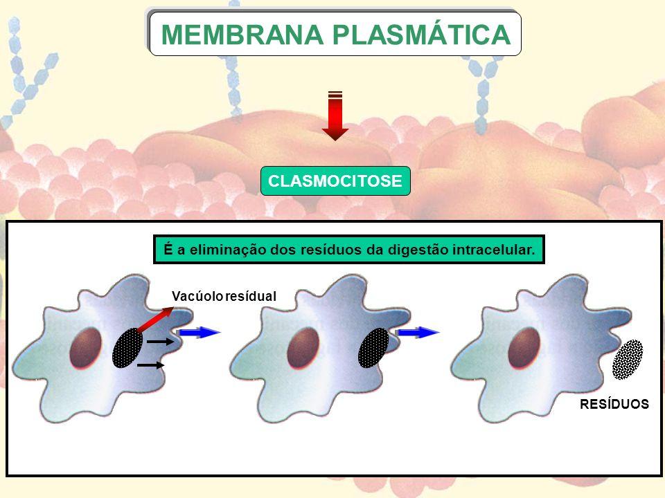 É a eliminação dos resíduos da digestão intracelular.