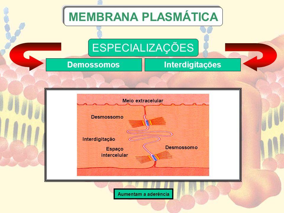 MEMBRANA PLASMÁTICA ESPECIALIZAÇÕES Demossomos Interdigitações