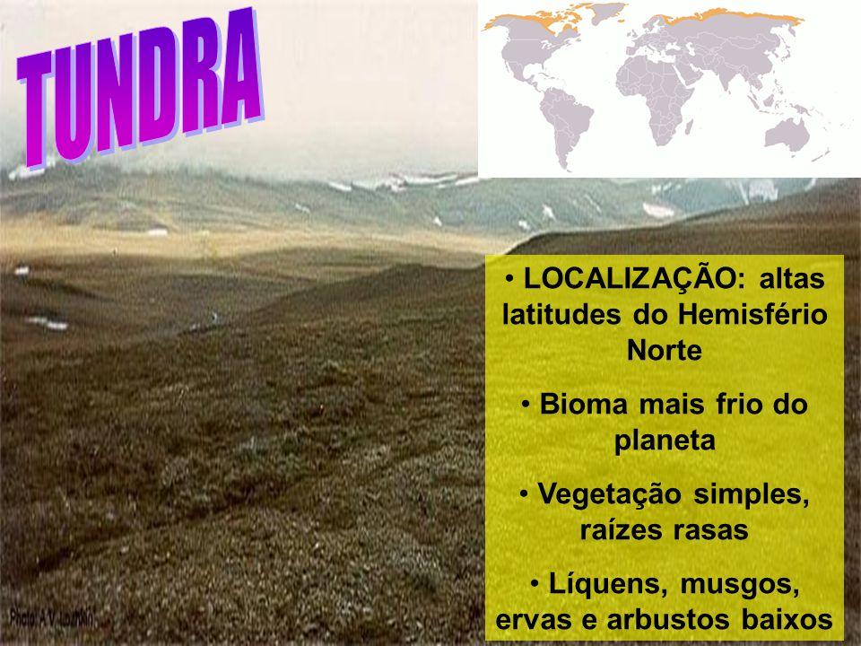 TUNDRA LOCALIZAÇÃO: altas latitudes do Hemisfério Norte