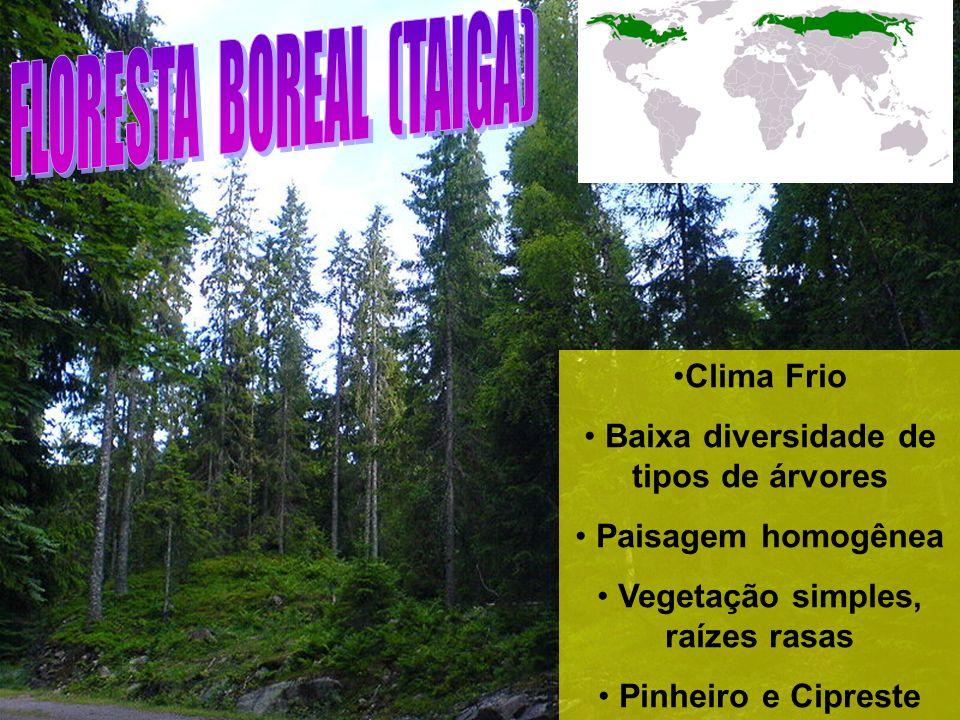Baixa diversidade de tipos de árvores Vegetação simples, raízes rasas