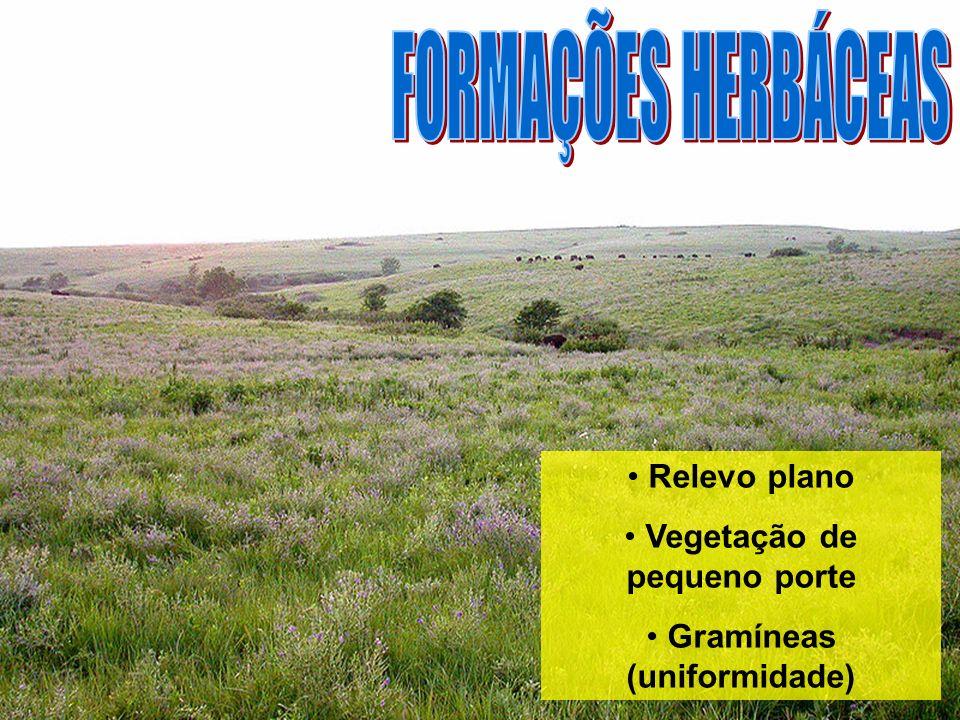 Vegetação de pequeno porte Gramíneas (uniformidade)