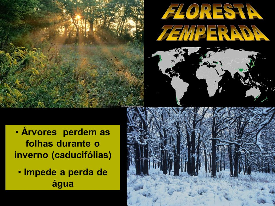 Árvores perdem as folhas durante o inverno (caducifólias)