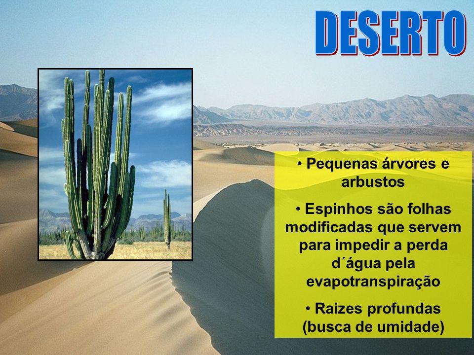 Pequenas árvores e arbustos Raizes profundas (busca de umidade)