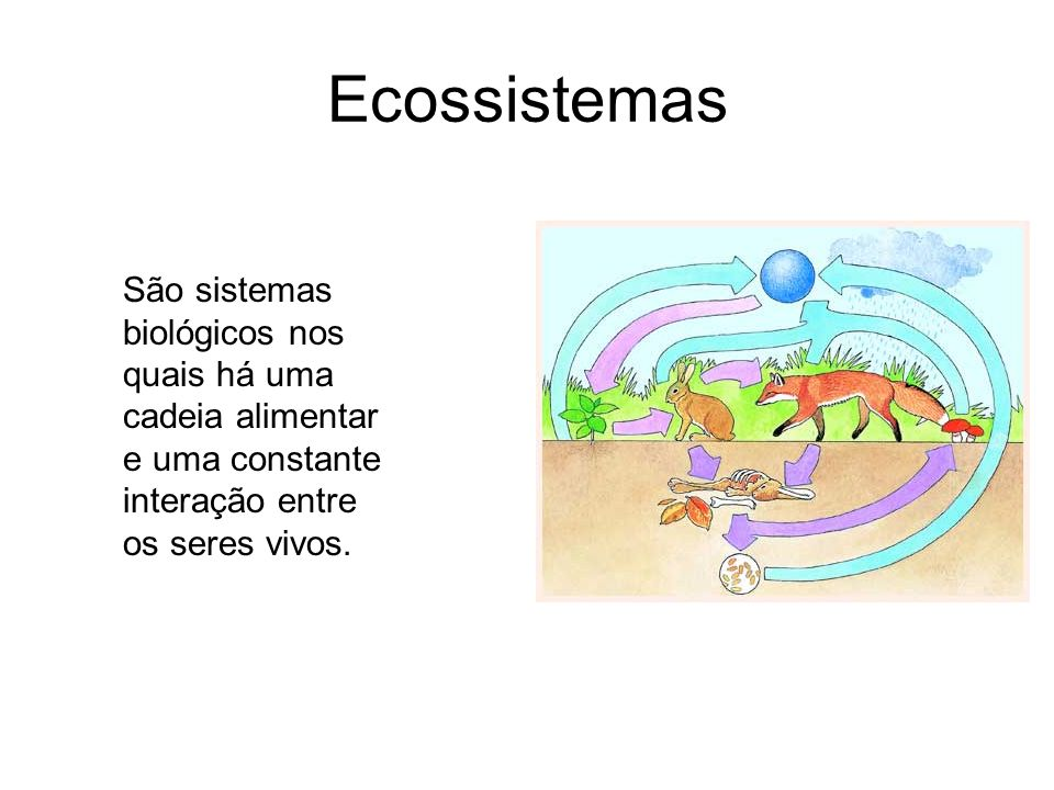 Ecossistemas São sistemas biológicos nos quais há uma cadeia alimentar e uma constante interação entre os seres vivos.