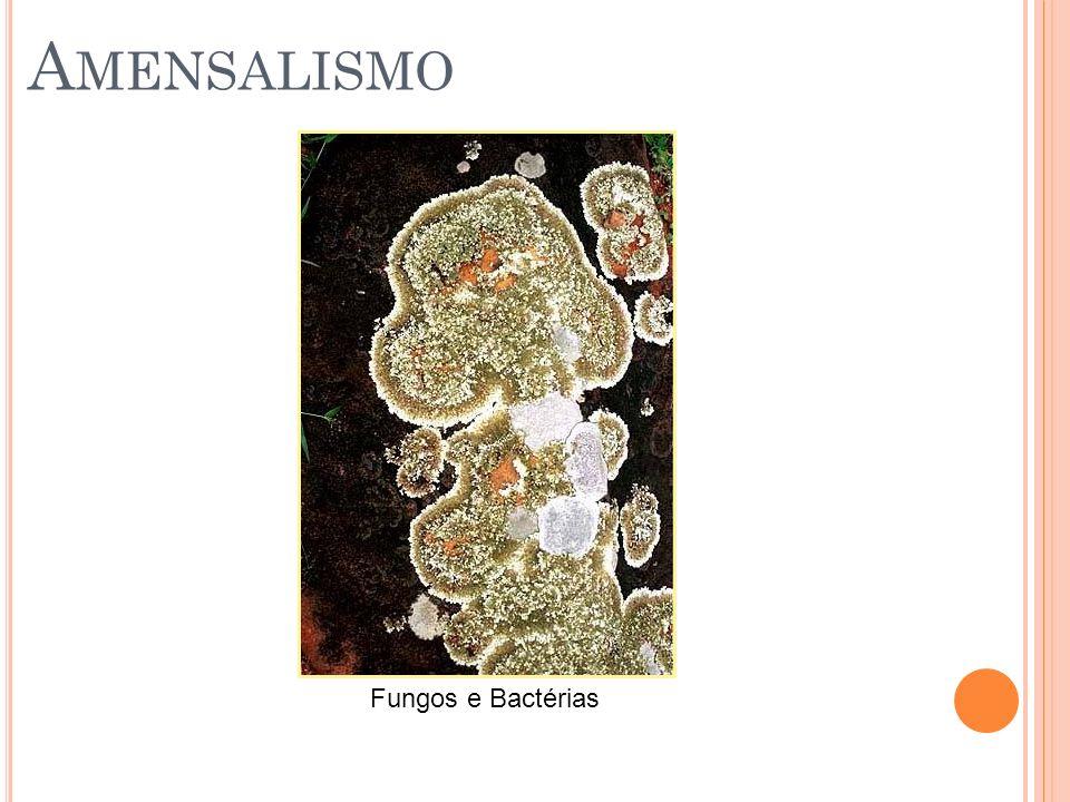 Amensalismo Fungos e Bactérias