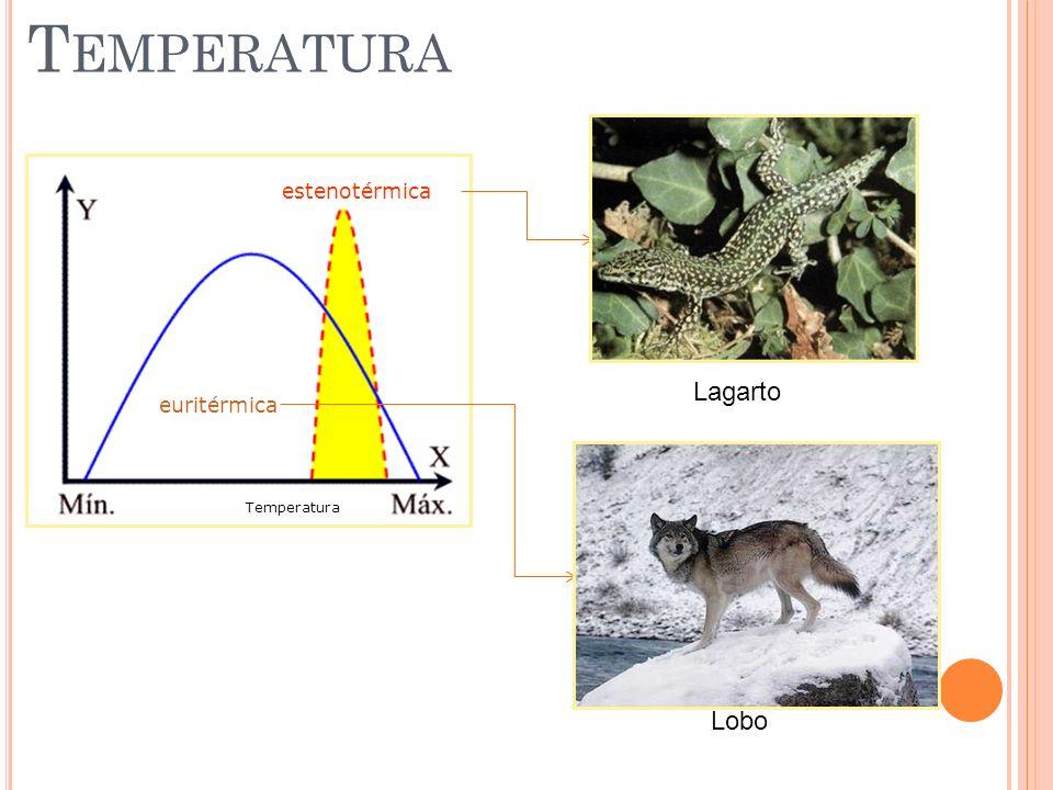 Temperatura estenotérmica Lagarto euritérmica Temperatura Lobo