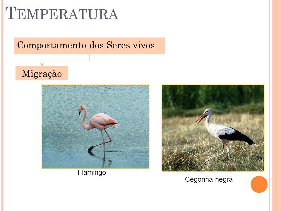 Temperatura Comportamento dos Seres vivos Migração Flamingo