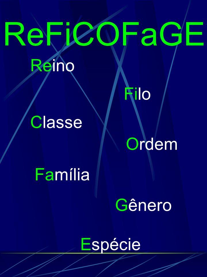 ReFiCOFaGE Reino Filo Classe Ordem Família Gênero Espécie