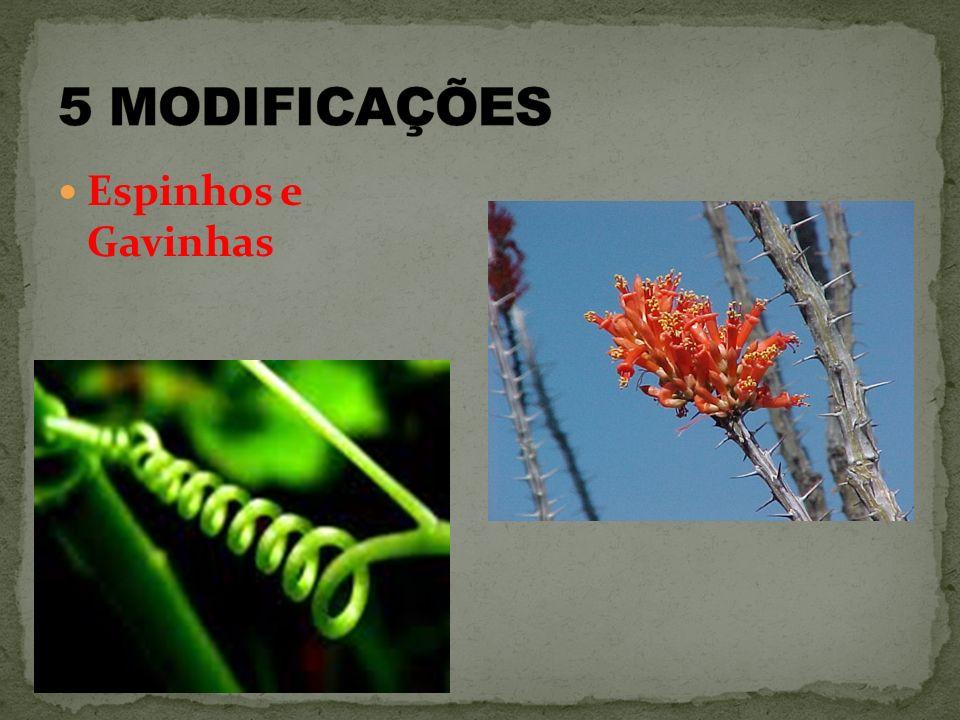 5 MODIFICAÇÕES Espinhos e Gavinhas
