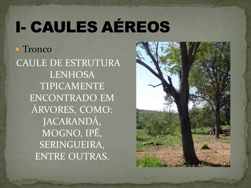 I- CAULES AÉREOS Tronco