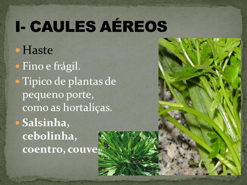 I- CAULES AÉREOS Haste Fino e frágil.