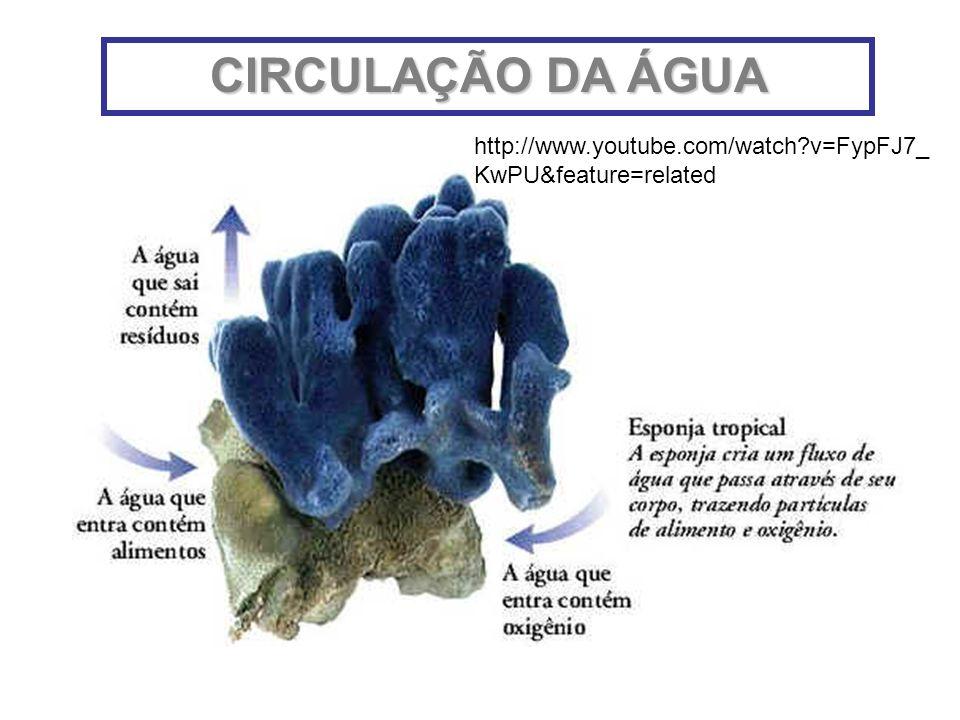 CIRCULAÇÃO DA ÁGUA http://www.youtube.com/watch v=FypFJ7_KwPU&feature=related