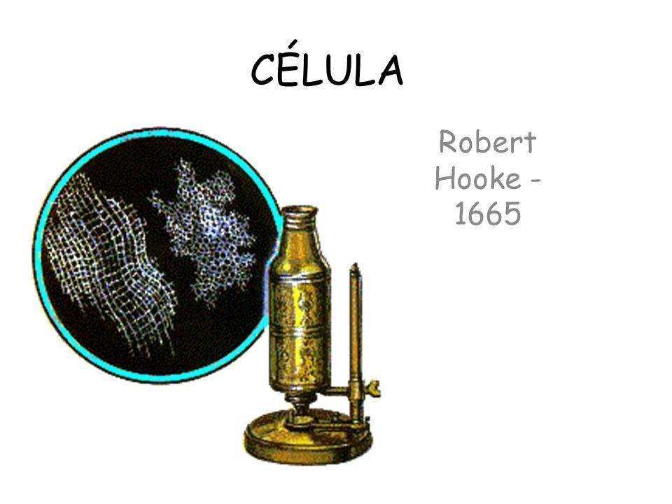 CÉLULA Robert Hooke - 1665