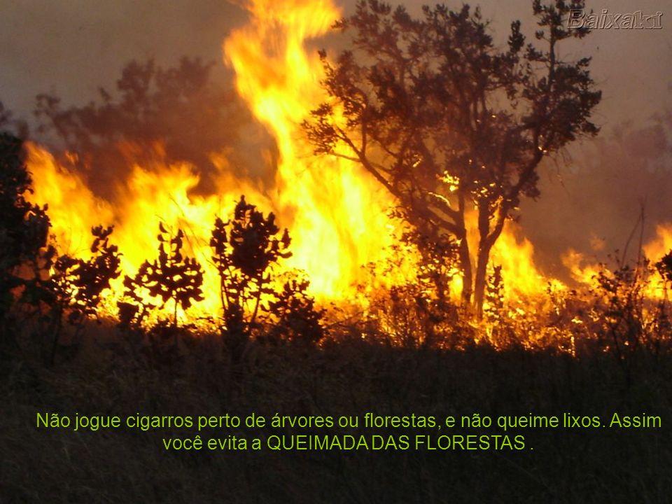 Não jogue cigarros perto de árvores ou florestas, e não queime lixos