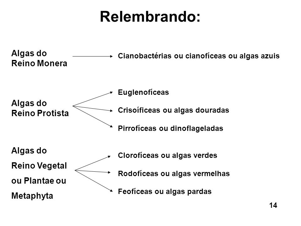 Relembrando: Algas do Reino Monera Algas do Reino Protista Algas do