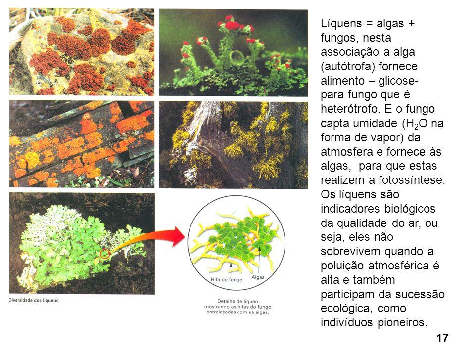 Líquens = algas + fungos, nesta associação a alga (autótrofa) fornece alimento – glicose-
