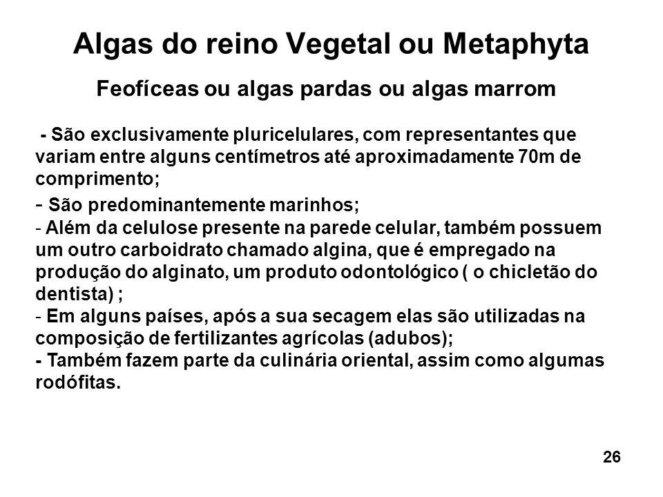 Algas do reino Vegetal ou Metaphyta