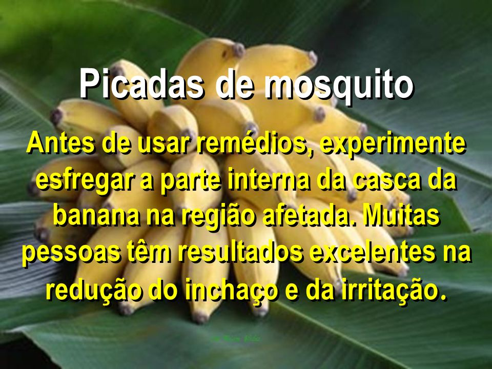 Picadas de mosquito Antes de usar remédios, experimente esfregar a parte interna da casca da banana na região afetada.